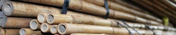 cropped-bonenstaken-tonkinstokken-bamboestokken1