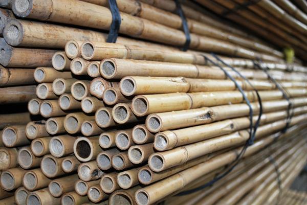 bonenstaken-tonkinstokken-bamboestokken1