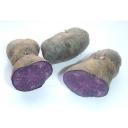 vitelotte noir aardappel