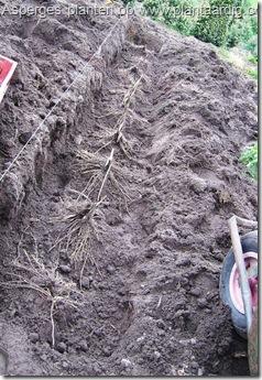 aspergesgeplant8_thumb
