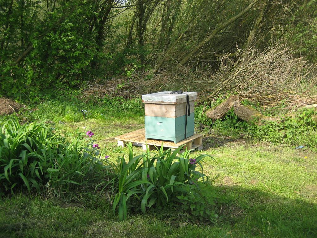 bijen te logeren (Medium)