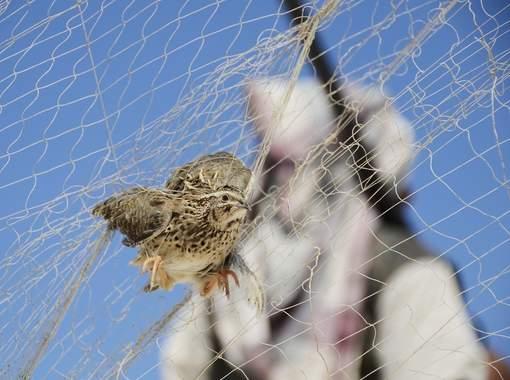 vogel in net