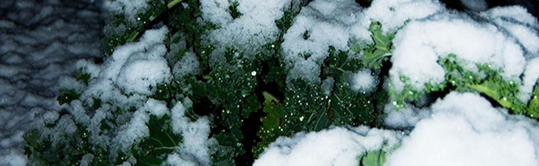 moestuin-winter